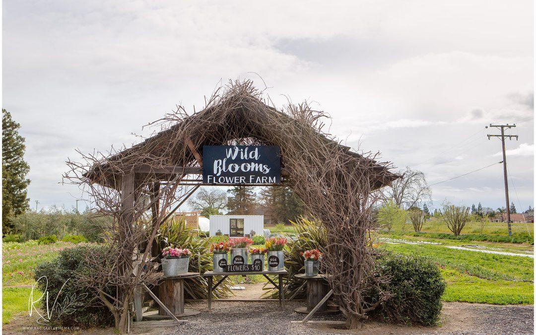 Business Spotlight: Wild Blooms Flower Farm Ripon CA